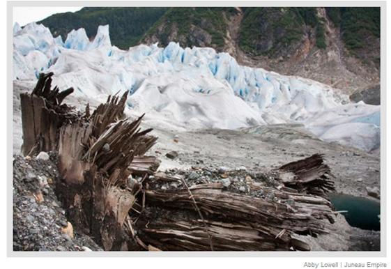 Image result for Melting Glacier Reveals Ancient Tree Stumps